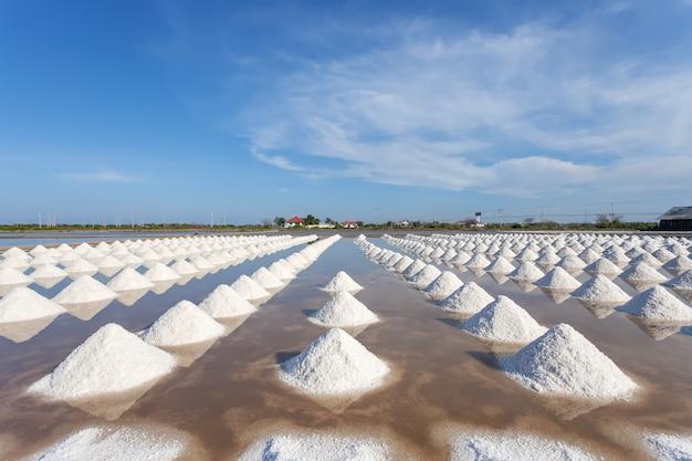 Sól w soli morskiej gospodarstwie rolnym przygotowywającym dla żniwa, tajlandia.