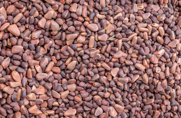Solidne tło świeżych dojrzałych i naturalnych nasion cedru. widok z góry