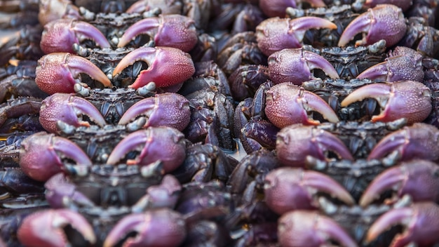 Solony krab to kiszony krab z solą, który jest surowy i użyty jako składnik w sałatce z krabów solonych