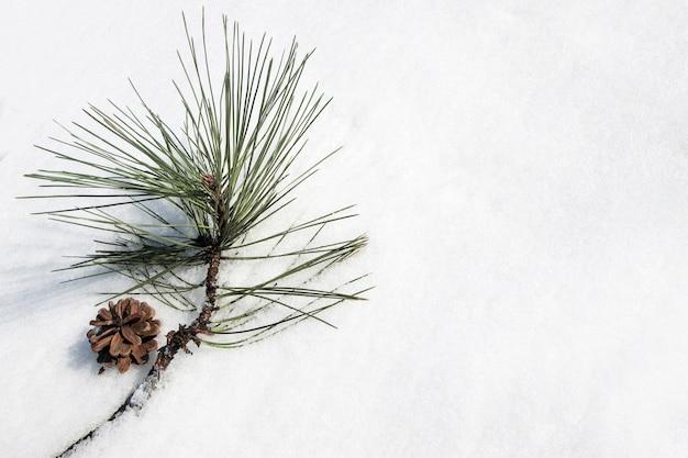 Sosna gałąź obok szyszki na białym śniegu