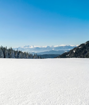 Sosna las w śnieżnych zim górach