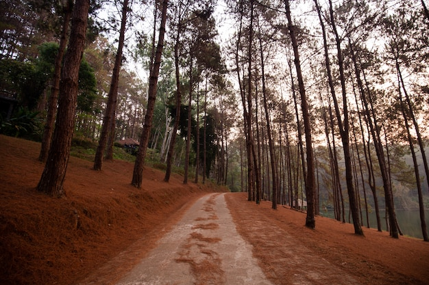 Sosnowy lasu park przy ssanie w żołądku ung, mae hong syna prowincja, tajlandia (ssanie w żołądku tong rezerwuar)