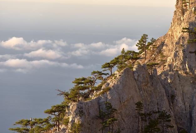 Sosny i góry w chmurach
