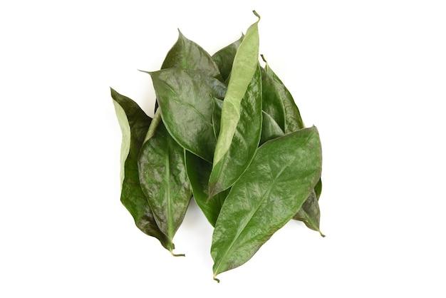 Soursop lub annona muricata suszone zielone liście na białym tle.