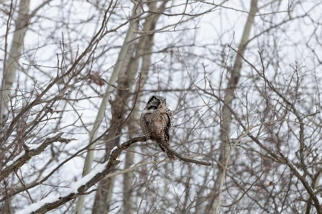 Sowa siedzi na gałęzi zimą w ciągu dnia
