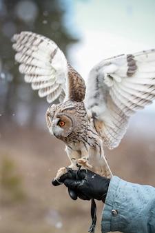 Sowa uszata renderowana na polu do latania i polowania