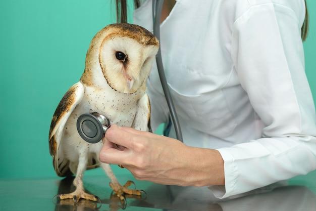 Sowa w lecznicy weterynaryjnej leczona przez lekarza weterynarii, opieka nad dzikim zwierzęciem