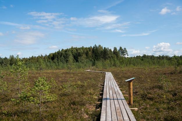 Spacer leśnej drogi w bagnie w słoneczny letni dzień.