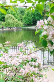 Spacer w ciepły słoneczny dzień w parku volkspark friedrichshain, jezioro w parku z kaczkami