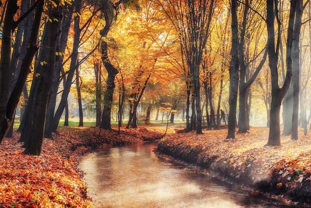 Spaceru sposób most nad rzeką z kolorowych drzew jesienią