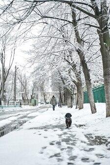 Spaceruj z psem w parku zimowym. szczęśliwy pies w pokrytym śniegiem parku.