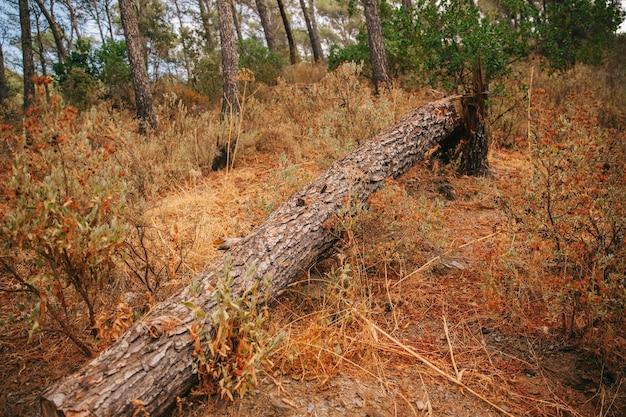 Spadające drzewo w przyrodzie