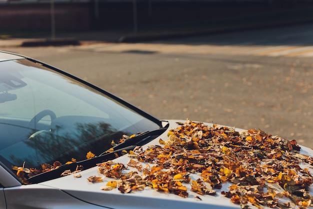 Spadające jesienne liście na przedniej szybie samochodu.