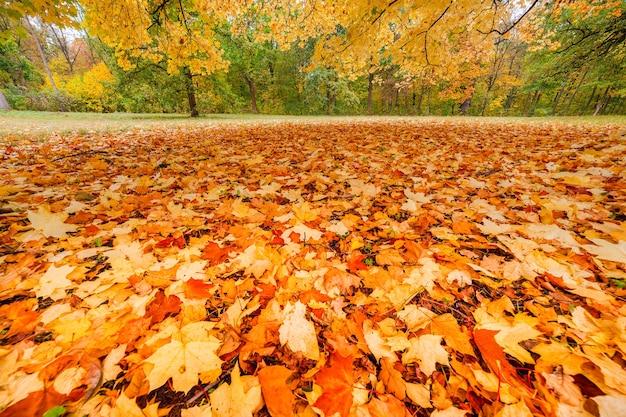 Spadające jesienne liście w parku, sezonowy krajobraz