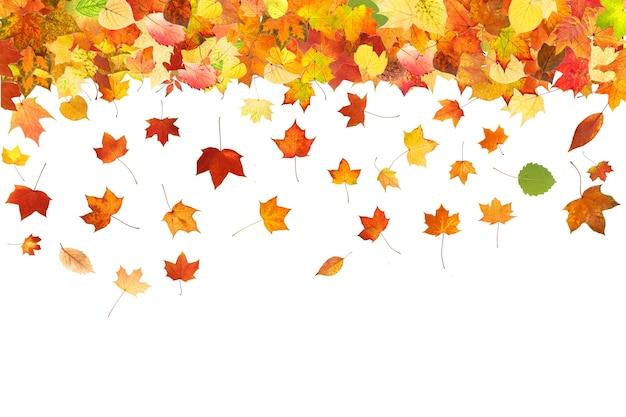 Spadające kolorowe jesienne liście na białym tle