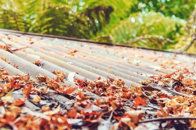 Spadające liście klonu na dachu.