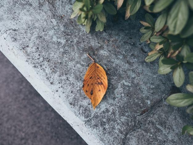 Spadek liść na skale w parku