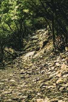 Spadek liści krajobrazu leśnego krajobraz turystyka