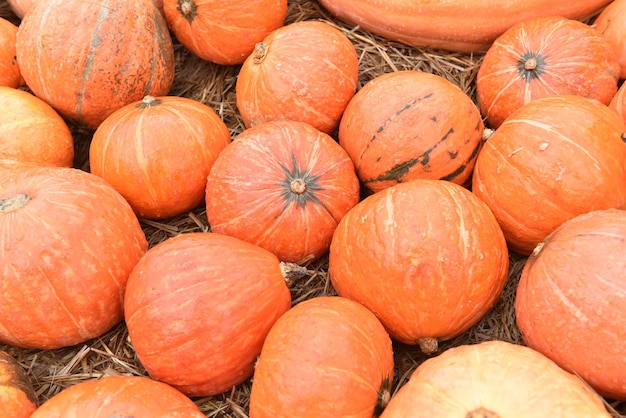 Spadek róg obfitości zbiorów. dynia w sezonie jesiennym. na święto dziękczynienia i dekoracje na halloween.