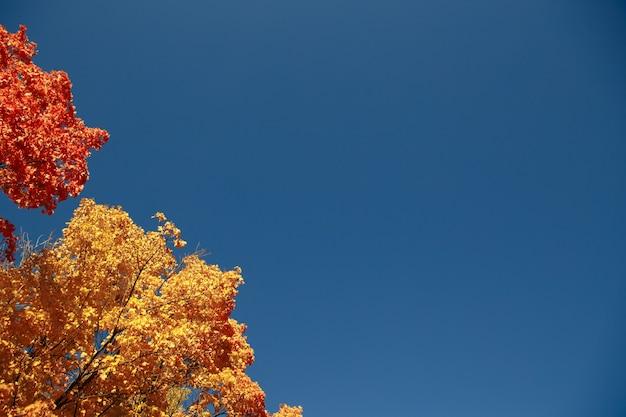 Spadek żółtych liści klonu w pobliżu wody
