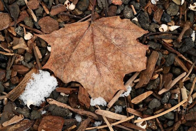 Spadły liść klonu zimą w lesie otoczonym kamieniami i patykami