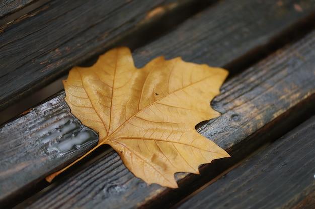 Spadły żółty liść na ławce w parku
