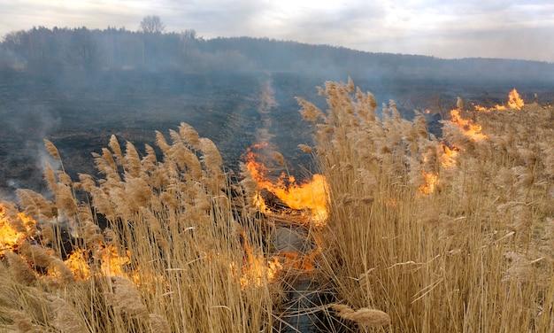 Spalanie suchej trawy w pobliżu lasu. katastrofa ekologiczna ze szkodliwymi emisjami do atmosfery.