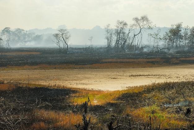 Spalony w namorzynach z drzewami dymu ognistego i ziemią jesionową w stanie pitimbu paraiba w brazylii