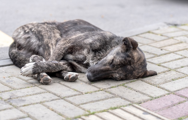 Spanie opuszczony pies na ulicy