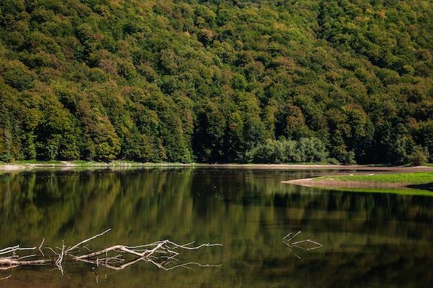 Spasione drzewo leży w wodzie. jezioro biogradsko w parku narodowym biogradska gora (monte