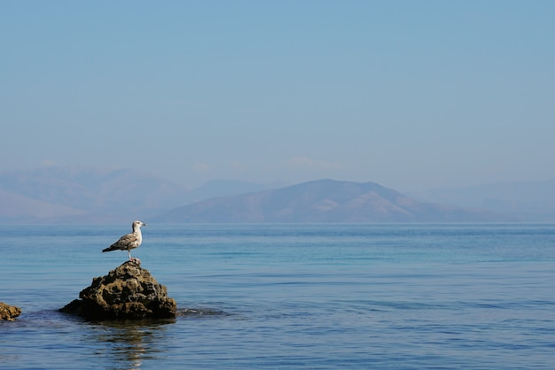 Specjalny ptak wodny na morzu korfu, grecja