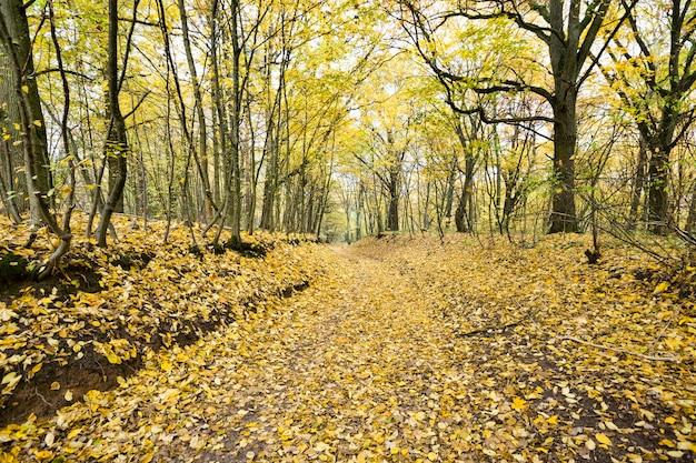 Specyficzna jesienna pogoda w lesie z żółto-zielonymi liśćmi, krajobraz