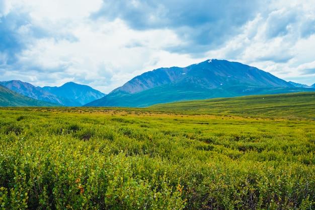 Spektakularny widok gigantycznych gór pod chmurnym niebem. ogromne pasmo górskie przy pochmurnej pogodzie. cudowna dzika sceneria. atmosferyczny krajobraz góralskiej przyrody. dramatyczny krajobraz górski. malownicza flora.