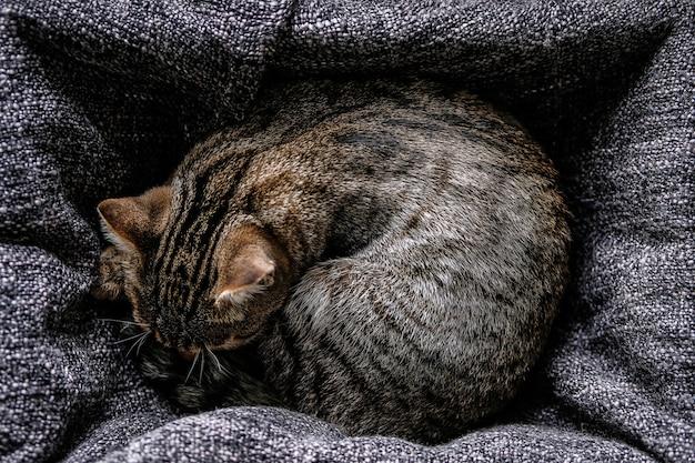 Śpiący bezdomny kotek