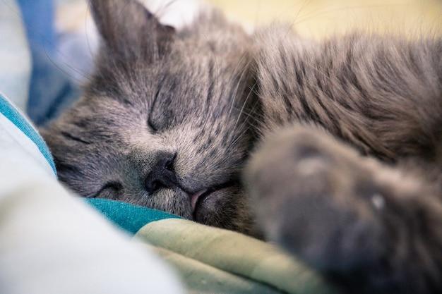 Śpiący kot w pozycji leżącej