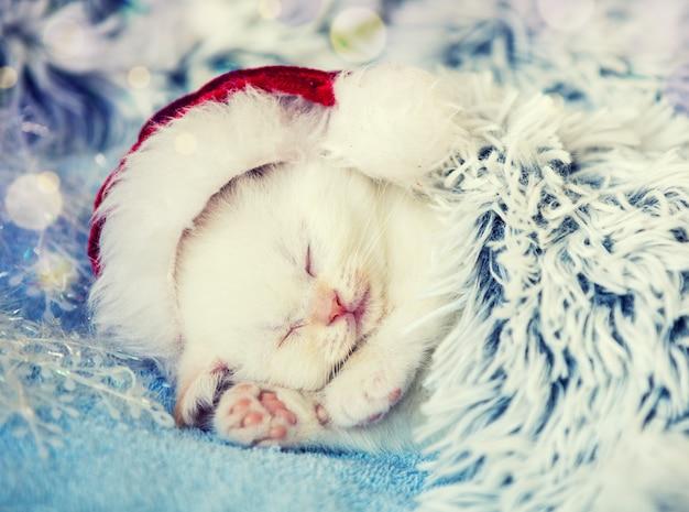 Śpiący mały kotek w kapeluszu świętego mikołaja. kotek okryty puszystym kocykiem
