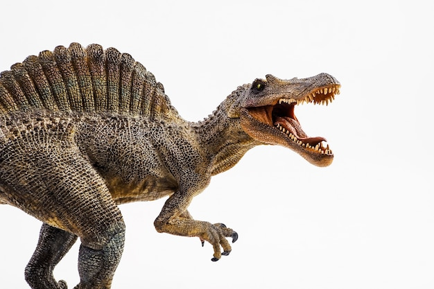 Spinosaurus, dinozaur na białym tle