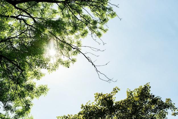 Spójrz z dołu na słońce świecące przez gałęzie drzewa