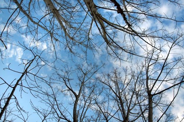 Spojrzenie w górę gałęzi drzew z liśćmi lo jesienią.