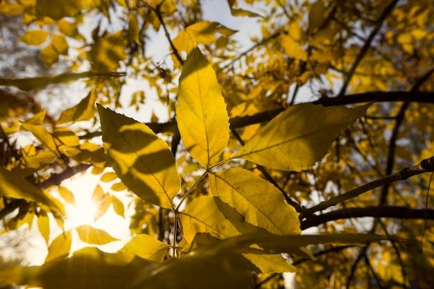 Spokojna jesienna przyroda z pożółkłymi liśćmi drzew w sezonie jesiennym, ciepła słoneczna pogoda na początku września jesienią.
