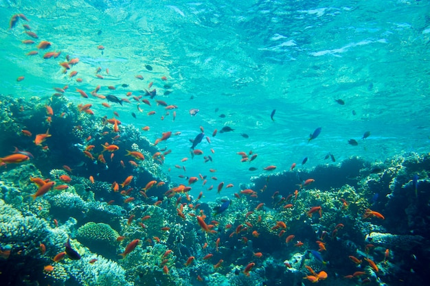 Spokojna podwodna scena z kopii przestrzenią