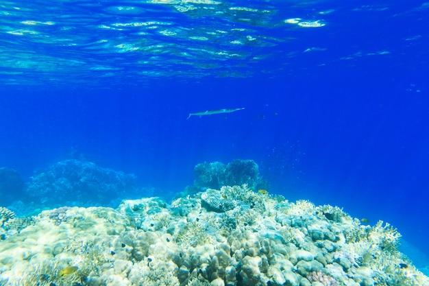 Spokojna podwodna scena z miejsca na kopię