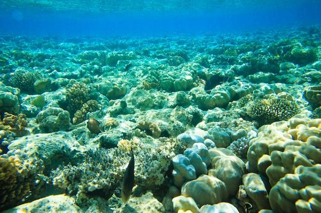 Spokojna podwodna scena z miejscem na kopię
