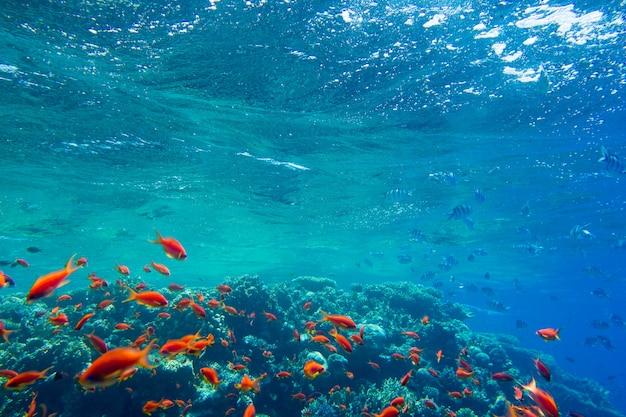 Spokojna podwodna scena