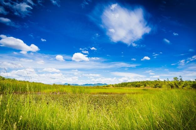 Spokojna scena zielonego pola i błękitnego nieba
