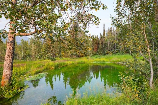 Spokojne jezioro w lesie