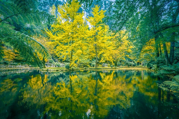 Spokojne ustawienia stawu i drzew jesienią