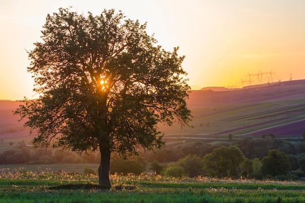 Spokojny i pokojowy widok piękny duży zielony drzewo przy zmierzchem r samotnie w wiosny polu na odległych wzgórzach kąpać się w pomarańczowym wieczór świetle słonecznym i wysokonapięciowych liniach rozciąga horyzontu tło.