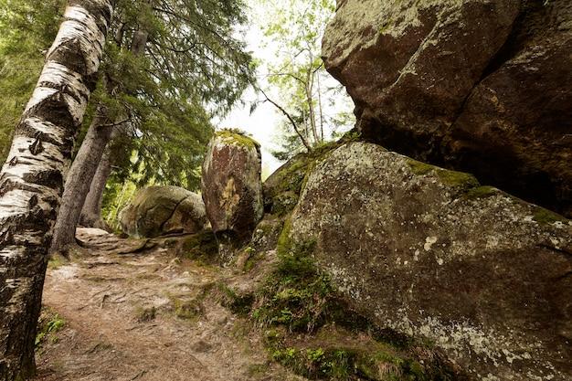Spokojny kawałek lasu w świetle dziennym