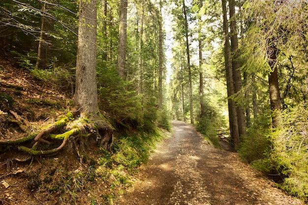 Spokojny kawałek natury w świetle dziennym